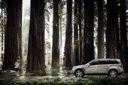oort-mb-calender-redwoods