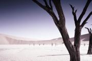 oort-namibia-dead-trees